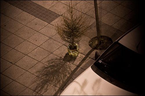 árbol de navidad olvidado